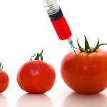 GMO 3 Tomatoes