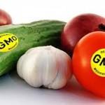 GMO Veggies